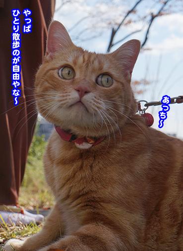 hitori8524.jpg