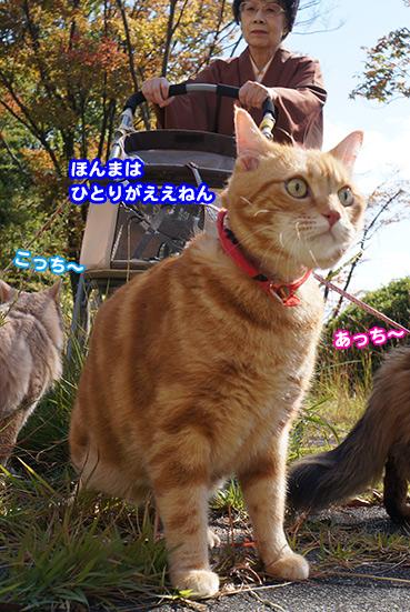 hitori8541.jpg