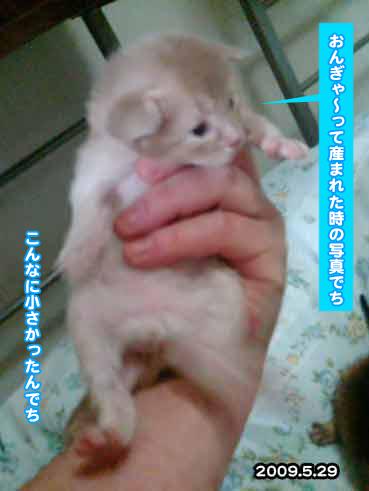 20091125_548144.jpg