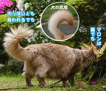 5592犬の尻尾.jpg