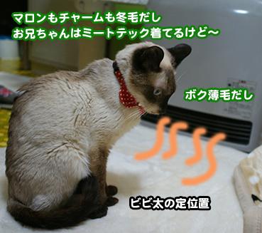 0154_1.jpg
