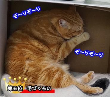 9650_1.jpg
