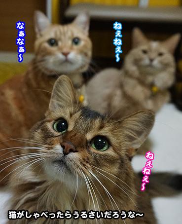 を 大阪 猫 弁 しゃべる