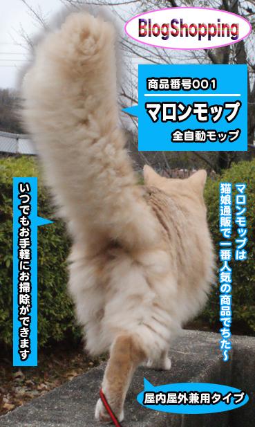 こ ゃ ブログ 白 み ー 猫