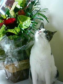 かわいい表情のネコ
