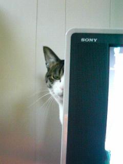 一瞬ガン見する猫