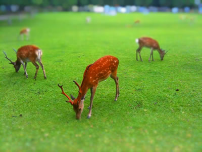 奈良の鹿をミニチュアライズ
