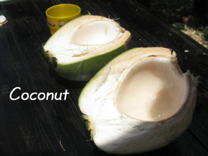 椰子の実2
