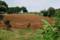 畝作り完了