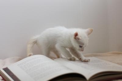 研究熱心な子猫