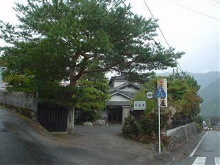 051029_大西屋さん入り口の大きな松ノ木。