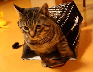 猫ヨドバシ袋