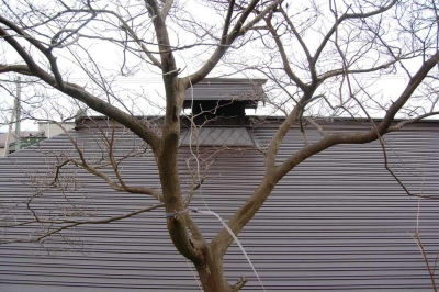 茨木家中出張番屋_屋根工事完了