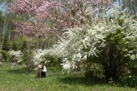 5月の大泉