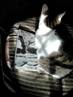 穂積生萩歌集『猫と男達」