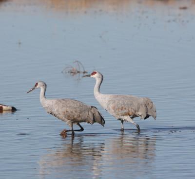 水の中の2羽