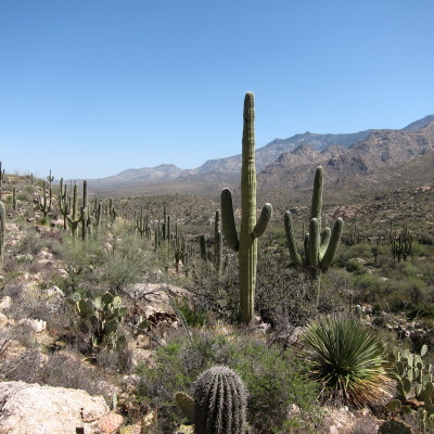 Saguaro & Pusch Ridge Mt.