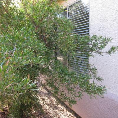 巣のある木
