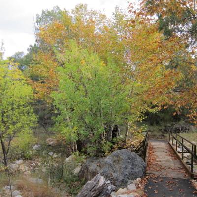 マデラ渓谷の紅葉