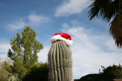 Saguaro Xmas 1