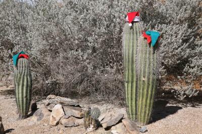 Saguaro Xmas 2