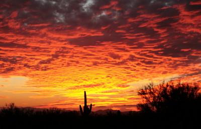 ソノラ砂漠の夕日