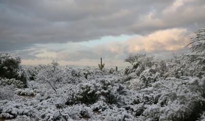 雪景色とサワーロサボテン