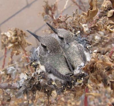巣の雛 1