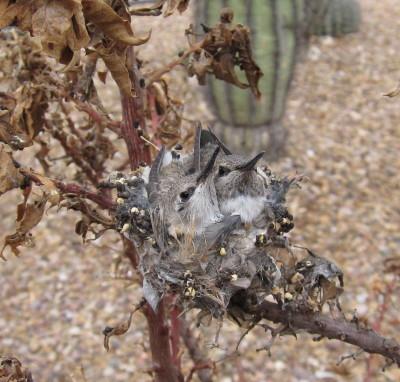 巣の雛 2