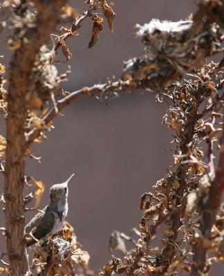 古巣を見上げる雛