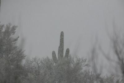 吹雪の中のサワーロ