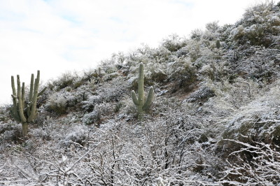 雪に埋もれるサワーロ