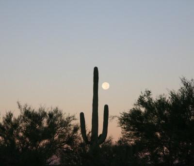 満月とサワーロ