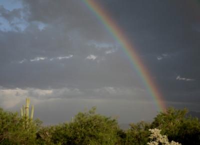 虹がかかる大サボテン