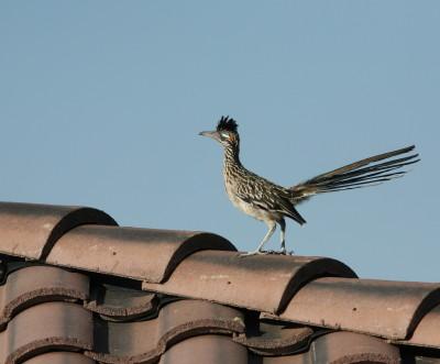 屋根の上のロードランナー