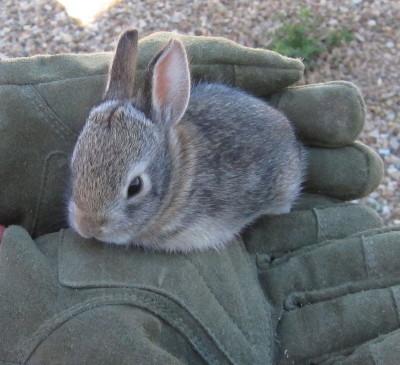 手のひらの子ウサギ