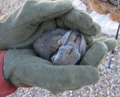 眠った子ウサギ 1