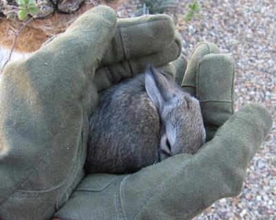 眠った子ウサギ 2