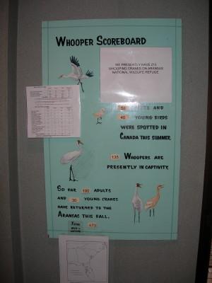 Whooper Score Boad