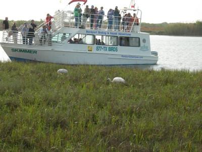 観光用ボート