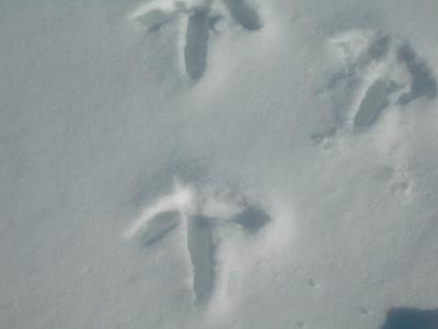ツルの足跡