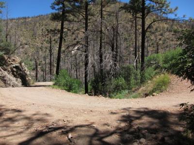 ベニイタダキアメリカムシクイ巣の場所