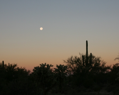 Super Moon & Saguaro 1