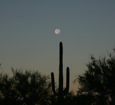 Super Moon & Saguaro 2