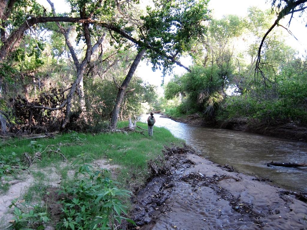 風景サンタクルーズ川