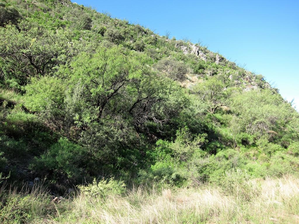 風景 Montosa Canyon
