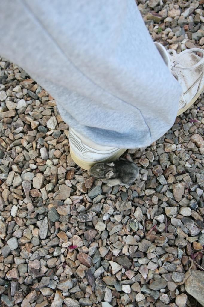 靴に寄り添うワタオウサギの子