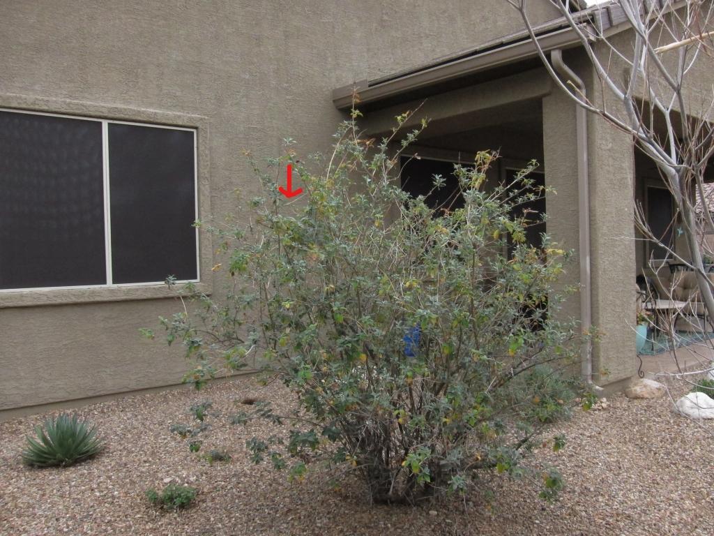 寝室の窓と巣の木