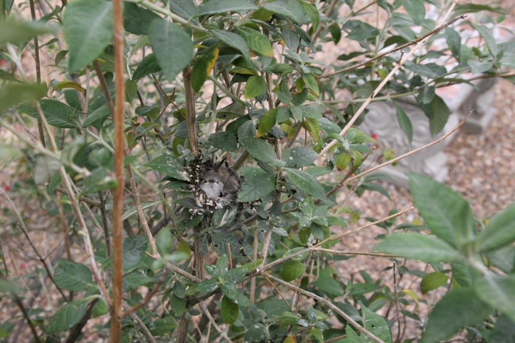 巣の全体像