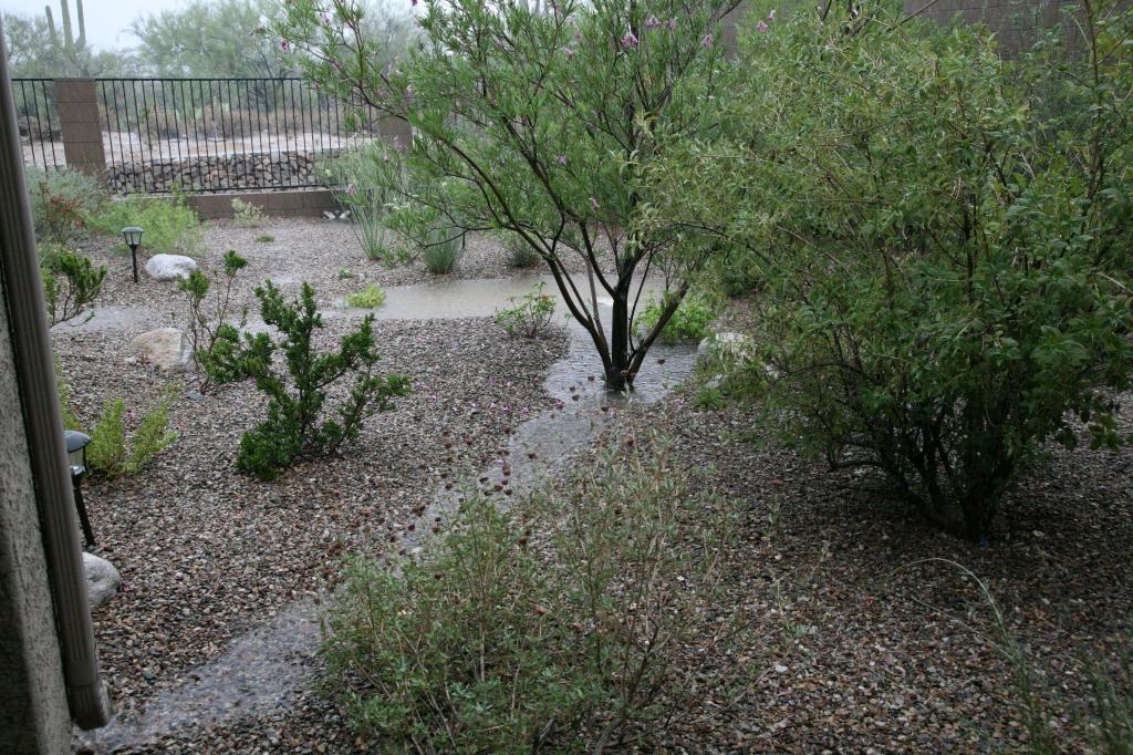 雨どいから流れる雨水